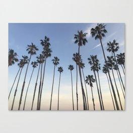 Santa Barbara Palms Canvas Print