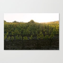 Sunset Over the Vineyard Canvas Print