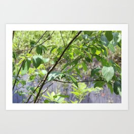 Leaves and Branches at Black Bayou, Monroe, Louisiana Art Print