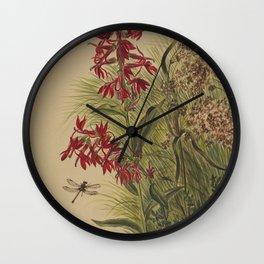 1800 American fine watercolor art by Mary Vaux Walcott.  Cardinal Flower (Lobelia cardinalis)   Flow Wall Clock