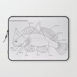 Anatomy of a Darter Laptop Sleeve