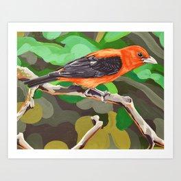 Scalet Tanager Art Print