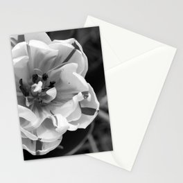 Flaming Parrot Tulip Black and White Stationery Cards