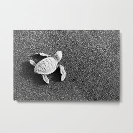 Guatemala - Sea Turtle to the Sea Metal Print