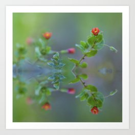 Reflection of little red wildflowers Art Print