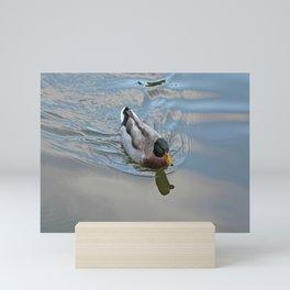 Mallard duck swimming in a turquoise lake 1 Mini Art Print