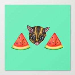 Sugarglider & Melons Canvas Print