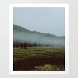 YNP fog 1 Art Print