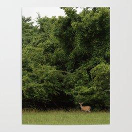 Hello Deer Poster