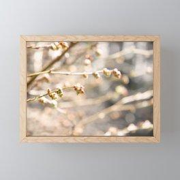 Spring Buds Framed Mini Art Print
