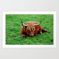buffalo Art Prints featuring buffalo by  Agostino Lo Coco