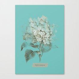 HYDRANGEA 3 Canvas Print