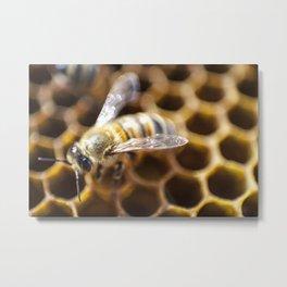 Queen Bee Metal Print