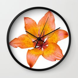 Coral Colored Lily Isolated on White Wall Clock