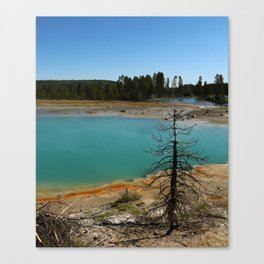Amazing Hot Spring Colors Canvas Print