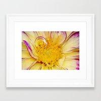 dahlia Framed Art Prints featuring Dahlia by ThePhotoGuyDarren