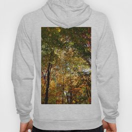 Through the Trees in October Hoody