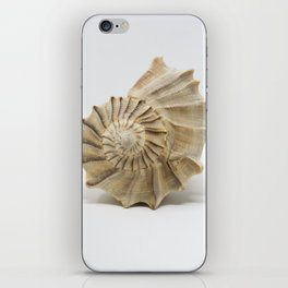 Lightning Whelk Seashell iPhone Skin