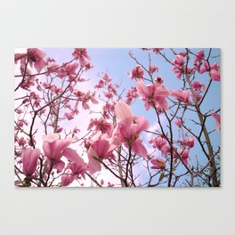 Magnolia's Canvas Print
