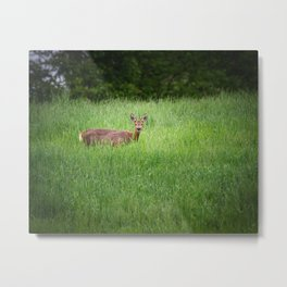 Encounter With A Roe Deer Metal Print