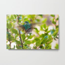 Hummingbird Summer Blur photography by CheyAnne Sexton Metal Print