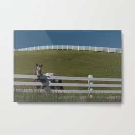 Horse in the Palouse Metal Print