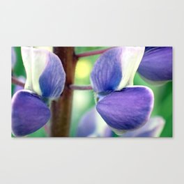 Lupin 2 Canvas Print
