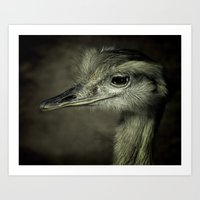 ostrich Art Prints featuring  ostrich by beautifyprints