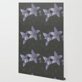 Botanical Still Life Photography Lily Wildflower Wallpaper