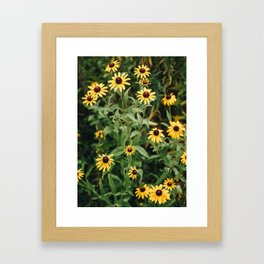 Daisies for You Framed Art Print
