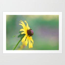 Portrait of a Wildflower Art Print