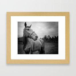 Horses of Instagram Framed Art Print
