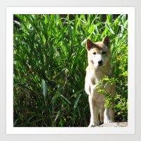 Stoic Wolf Pup Art Print