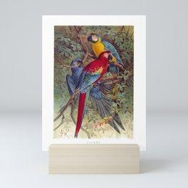 Vintage Macaws Mini Art Print