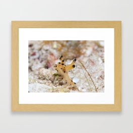 Reach for the stars nudibranch Framed Art Print