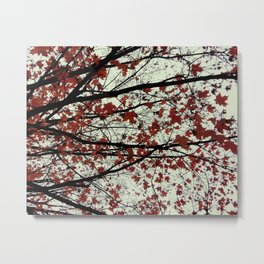 red maple leaves on a pea soup day Metal Print