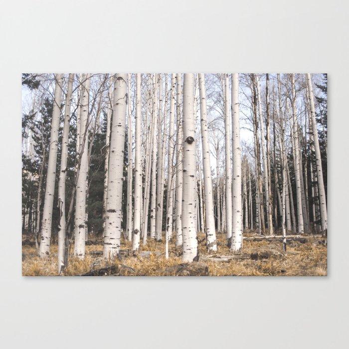 Trees of Reason - Birch Forest Leinwanddruck