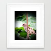 sparrow Framed Art Prints featuring Sparrow by Angelandspot