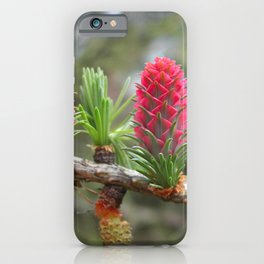 Striking bright pink larch flowers iPhone Case