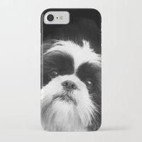 shih tzu iPhone & iPod Cases featuring Shih Tzu Dog by ritmo boxer designs