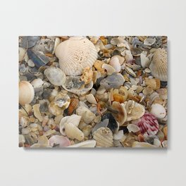 Nature's Seashell Collage Metal Print