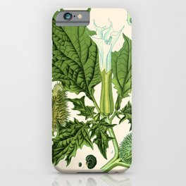 Datura stramonium (thorn apple - jimson weed or devil s snare) - Vintage botanical illustration iPhone Case
