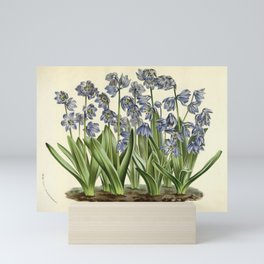 Flower scilla sibirica Mini Art Print