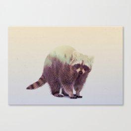 Little Ones: Raccoon Canvas Print
