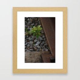 Little 'Green Leaf' On The Tracks Framed Art Print