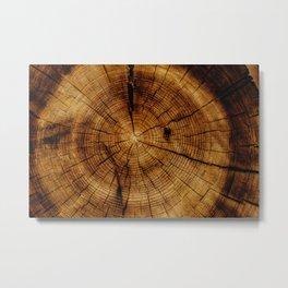 Inside the Tree (Color) Metal Print