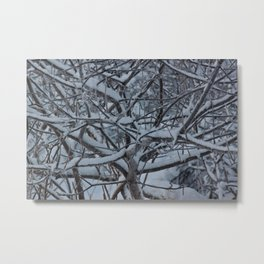 Snow Covered Alders Photography Print Metal Print