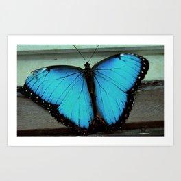 Broken-Winged Butterfly Art Print
