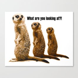 What Are You Looking At?! (Meerkats) Canvas Print