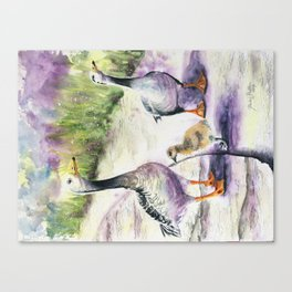 We Must be Quackers Canvas Print